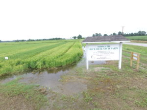 missouri-rice-research-farm-sign